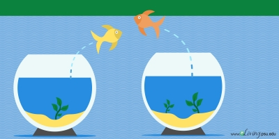 illustration of fish jumping into each other's fishbowl
